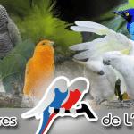 Les Volières de l'Atlantique pour votre Perroquet