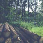 Choisir l'essence de bois pour sa maison à ossature bois