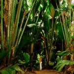En vacances aux Seychelles ou à l'île Maurice ? Quelles sont les activités possibles ?