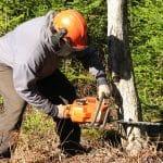 Conseils pour abattre un arbre en toute sécurité