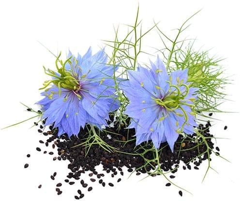 graines-et-fleurs-de-nigella-sativa