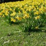 Quelles sont les notes florales du printemps ?