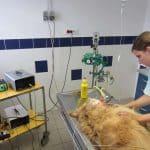 Vous créez votre clinique vétérinaire? Voilà ce à quoi vous devez penser!