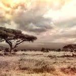 À l'assaut d'une destination protectrice de la vie sauvage, Botswana