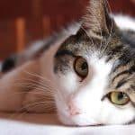Comment prendre soin de son animal domestique ?