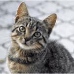 3 matériels indispensables pour l'accueil de votre chat !
