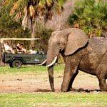 Les merveilles de Tanzanie : parc, animaux, cuisine